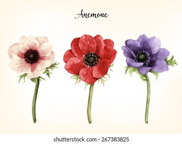 Anemone, watercolor, can be used as greeting card, invitation card for wedding, birthday and other holiday and  summer background.  Vector illustration.