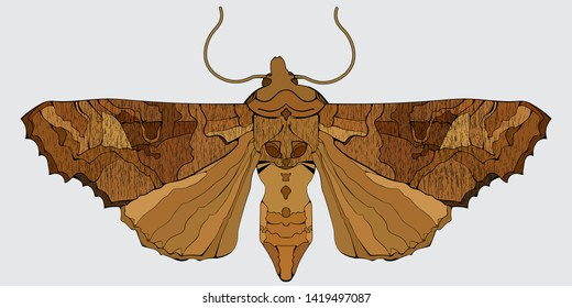 Angle shades moth. Vector illustration in decorative art deco style.