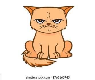 Angry cat multi color vector illustration