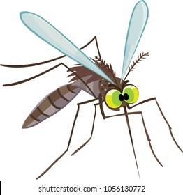 angry mosquito fly