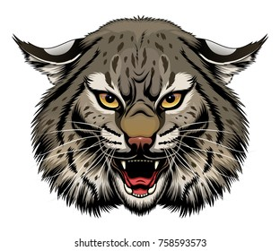 Angry stylized bobcat head. Vector illustration.