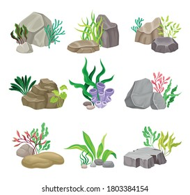 Angulated and Smooth Sea Stones with Seaweeds and Algae Vector Composition Set