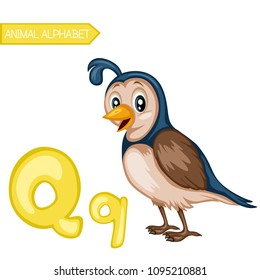 Animal Alphabet. Q is for Quail. Vector Illustration of a Happy Quail. Cute Cartoon Quail Isolated on a White Background. Happy Animals Set