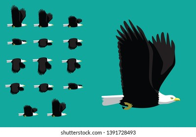Animal Animation Sequence American Eagle Flying Cartoon Vector