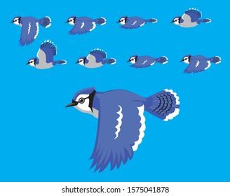 Animal Animation Sequence Blue Jay Flying Cartoon Vector
