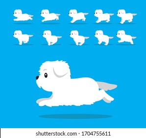 Animal Animation Sequence Dog Maltese Cartoon Vector