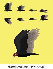 Animal Animation Sequence Turkey Vulture Flying Cartoon Vector