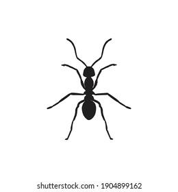 animal ant fill line icon vector illustration