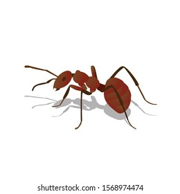 Animal Ant with red antenna