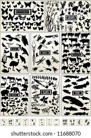 Animal, bird, fish, insect, butterfly and plant and animal footprints- vector