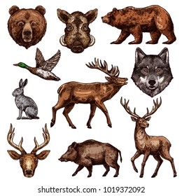 Animal and bird sketch of wild forest bear, deer and duck, wolf, reindeer and grizzly, elk, boar and hare. Carnivore and herbivore animal, water and predatory bird icon for hunting sport themes design