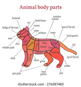 Fox Body Parts >> Animal Body Parts Images Stock Photos Vectors Shutterstock
