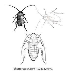 Animal Cockroach vector illustration black and white simple handrawn
