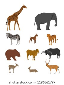 Animal collection, giraffe, elephant, zebra, tiger, dog, brown bear, cow, buffalo, antelope, deer on white background