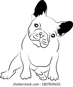 Animal Dog breed french bulldog vector illustration graphic design,