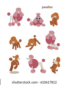 animal dog character poodle vector illustration flat design