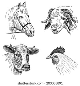 animal faces. hand drawing set of vector sketches