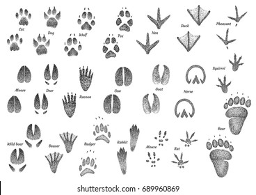 Animal footprint collection illustration, drawing, engraving, ink, line art, vector