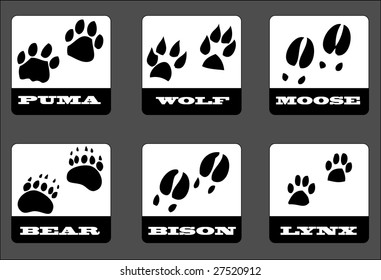 animal footprints. Vector