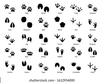Animal footprints. Walking track animals paw with name, pets tracks, bird and wild animals trail, wildlife safari feet silhouette isolated vector foot prints