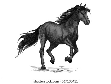 Animal horse stallion sketch.Equine natural animal running or american breed broodmare gait, purebred mustang trot. Nature or wildlife, sport equestrian club or hippodrome, stable or stall theme.