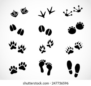 Animal and human paw and footprint set vector