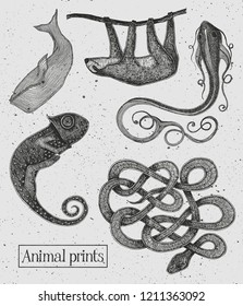 Animal illustrations on the vintage cement background