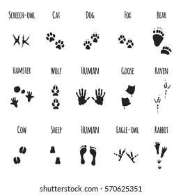 Animal Paws Black Prints