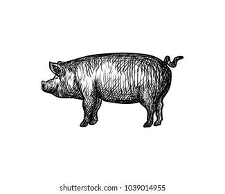 Animal Pig Hand Drawing Symbol Logo Vector