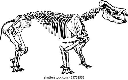 Skeleton Animal Stock Vectors Images Vector Art