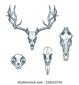 Animal skulls set isolated on white background. Deer, horse, cat, crow. Vector illustration, EPS 10. Contains transparent objects