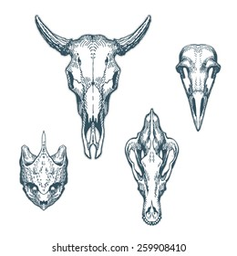 Animal skulls set isolated on white background. Cow, barn owl, turtle, Shepherd. Vector illustration, EPS 10. Contains transparent objects