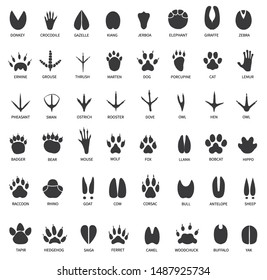 Animal tracks. Footprints of swan, llama and donkey, cat. Owl, dog and mouse, dove and zebra paw prints isolated vector set