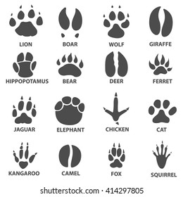 animal trails. Next to the name of the animal. Animal tracks vector illustration. animal paw print with the description.