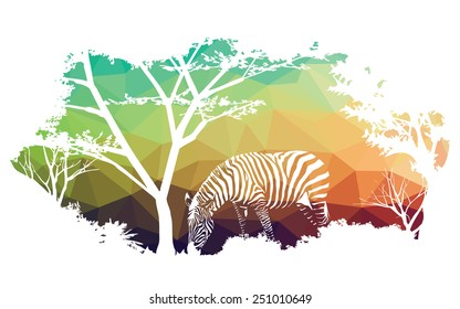 animal of wildlife (zebra)