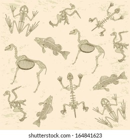 animals anatomy, skeleton of horse, pigeon, frog and turtle, archeology biology  pattern