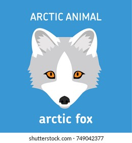 Animals of the Arctic. The head Arctic Fox. Vector Set of polar mammals. Flat style illustration