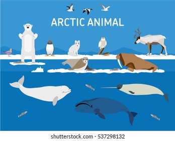 Animals of the Arctic. Vector Set of polar mammals and birds. Flat style illustration. Penguin, seal, lemming, owl, bear, fox, caribou, walrus, duck, pink Seagull, gull, white and greenland whale.