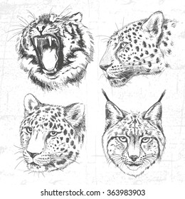 Animals around the World (Africa). Collection of hand drawn illustrations (originals, no tracing). Description: Each drawing comprise of one color. See also other sets of animals.