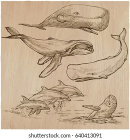 Animals around the World - CETACEANS. Collection of an hand drawn vector illustrations. Freehand sketches. Line art. Each drawing comprise of a few layers of outlines. Background is isolated.