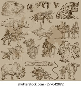 ANIMALS around the World (set no.26) - Collection of an hand drawn vector illustrations. Each drawing comprise a few layers of lines, the colored background is isolated. Easy editable.