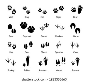 Animals and birds feet tracks, vector trails of wolf, dog and cat, tiger and bear with cow and elephant. Goose, chicken, horse and fox, deer with sheep or sparrow and crow. Turkey, rabbit and raccoon