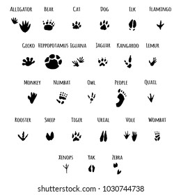 Animals, birds and people foot print vector set. Hand draw cartoon illustration isolated on a white background.