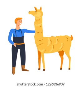 Animals breeding o n farm, male with llama vector. Farmer tending mammal vicugna type of lama, camelid representative cared by man from farmhouse. Alpaca guanaco breed with wool and hairy skin