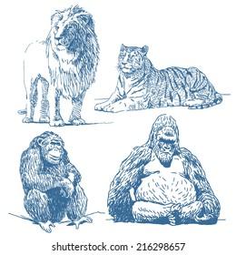 Animals drawings set isolated on white background: lion, lying tiger, ape, gorilla