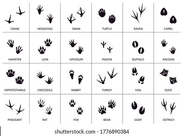 Animals footprint. Animal, birds and reptile foot marks, wild animals paw silhouettes, mammals walking paw tracks vector illustration set. Footprint bear, hamster and camel, pigeon and buffalo
