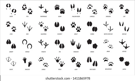 Animals footprints. Animal feet silhouette. Wild animals paw walking track or footprint tracks.