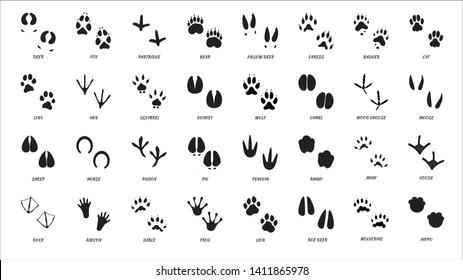 Animals footprints. Animal feet silhouette. Wild animals paw walking track or footprint tracks.