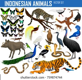 Animals of Indonesia and Indochina - vector set