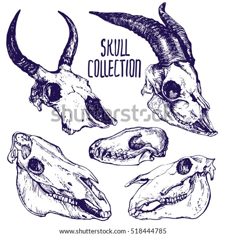 animals skulls hand drawn vector set stock vector royalty free